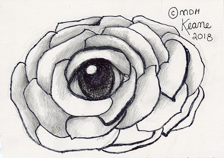 eye in carnation flower