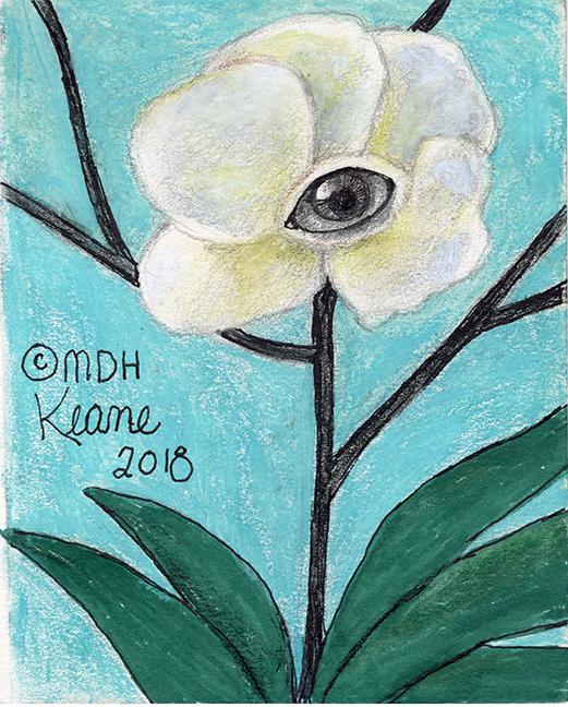 eye in white flower