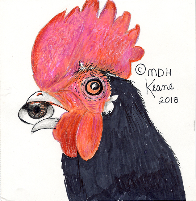 rhode island red with eye
