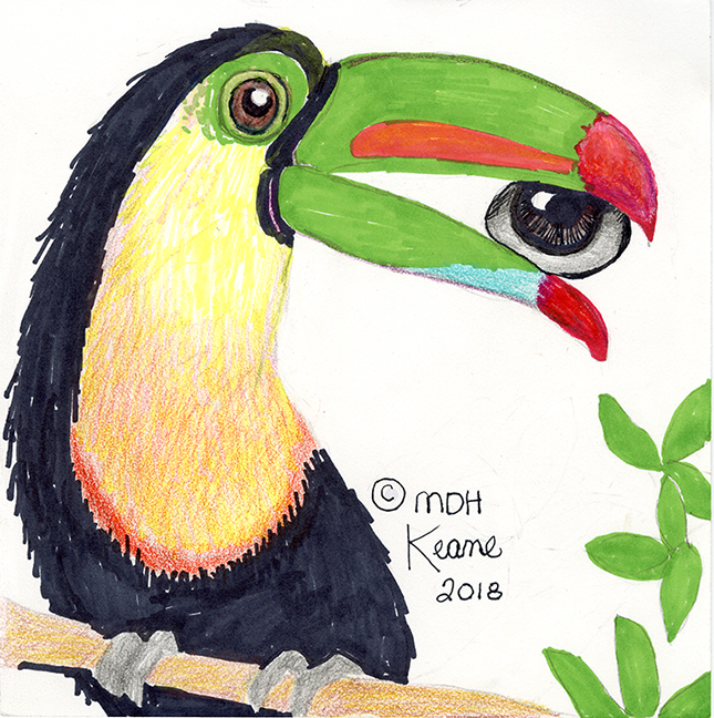 toucan with eye